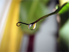 Twig with water droplet - nice photo